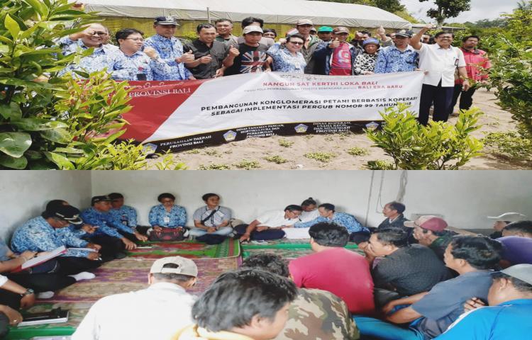 Sosialisasi Pendirian Koperasi dan Pemasaran bagi Kelompok Petani Jeruk di Desa Bayung Gede Kintamani