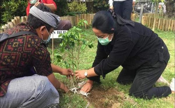 Penanaman pohon pucuk bang serangkaian Bulan Bakti Bung Karno, di Desa Awan Kintamani