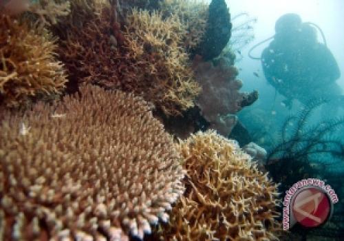 Terumbu karang telah beradapatasi dengan perubahan iklim