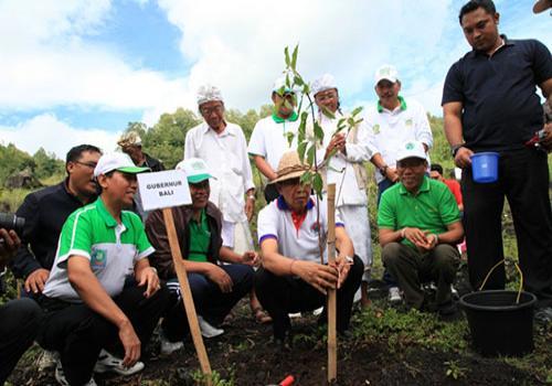 Dalam Upaya rehabilitasi Lahan Tandus Kaldera Kaldera Batur ditanami Ampupu dan Bambu