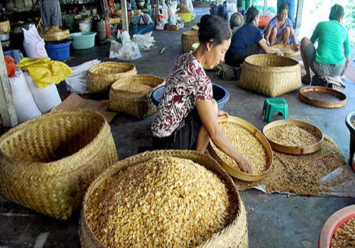Industri Kacang Desa Bang Bang, Tembuku