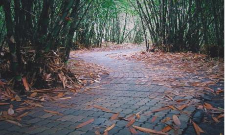 Hutan-Bambu-Penglipuran.html