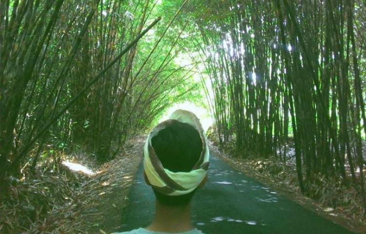Hutan Bambu Penglipuran Bangli, Tempat Wisata Instagramable di Bali